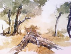 Kitty Wildlife Wallpaper, Giraffe, Kitty, Animals, Little Kitty, Giraffes, Animales, Animaux, Kitten