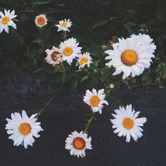 the white flowers | angelo gonzález | VSCO Grid