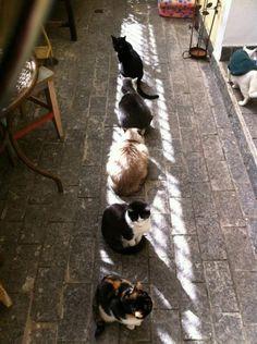 Solar Powered Cats Recharging
