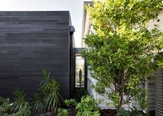 Take a look inside this blackened wood extension that has been added to a century-old Edwardian house in Melbourne.