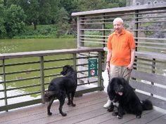 Tibetan Mastiff Rescue, Inc. - Minnie's Rescue Success Story - Click on Pic