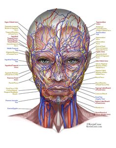 Anatomy Archives - Page 39 of 78 - Human Anatomy Diagram