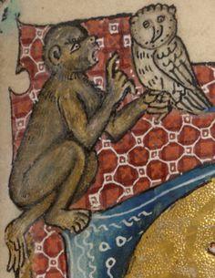 Monkey chastising owl (@BLMedieval, Add. 42130, 14th c.)