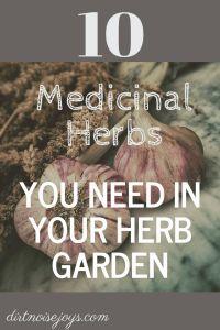 10 Herbs to Grow for Their Medicinal Purposes | Dirt Noise Joys Garden %