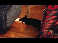 Cat Tearsa fall always   (YouTube)
