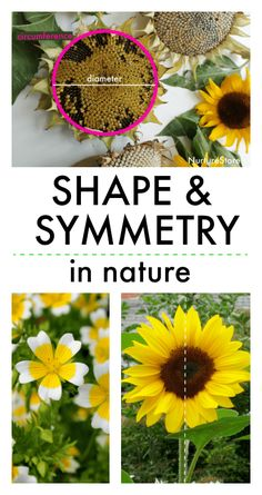 shape and symmetry in nature lesson, nature symmetry lesson plan, types of symmetry in flowers, math, geometry Symmetry Activities, Nature Activities, Stem Activities, Outdoor Education, Outdoor Learning, Maths In Nature, Math Patterns, Fun Math Games, Outdoor Classroom