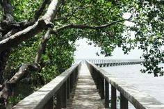 Mangrove Park, Dumaguete, Negros Oriental.
