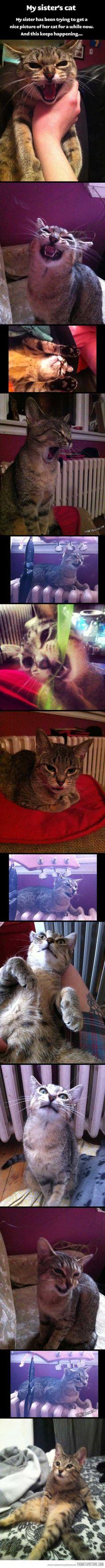 Not so photogenic cat…
