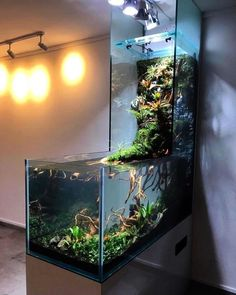 42 Astonishing Aquarium Design Ideas For Indoor Decorations - An aquarium is an enclosure with at least one clear side that houses water-dwelling fish, plants and other livestock and decorations. An aquarium offe. Aquariums Super, Amazing Aquariums, Planted Aquarium, Aquarium Fish, Aquarium Garden, Freshwater Aquarium, Conception Aquarium, Home Engineering, Indoor Water Garden