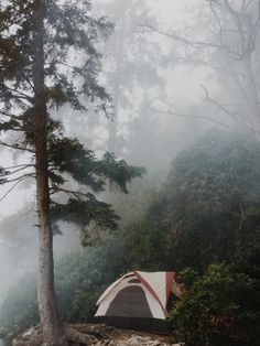 tent + foggy forest | camping + outdoors #adventure