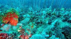 Ένας σπάνιας ομορφιάς κοραλλιογενής ύφαλος μόλις ανακαλύφθηκε - istioforos news