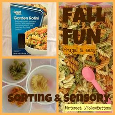 Fall sensory and sorting fun // easy & frugal toddler activity // pasta // play matters