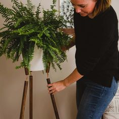 Tips for Spectacular modern plant stand calgary exclusive on NY Homes Inc