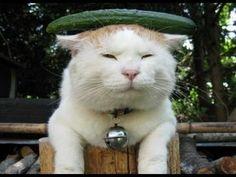 funny cats,funny cat videos,funny animals,cats funny crazy,funny videos,funny cats compilation 2014 HD http://www.youtube.com/watch?v=PZASpKoRoJE