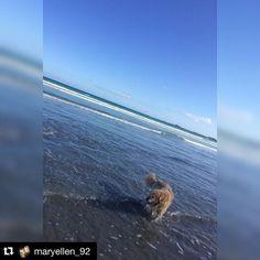 #Repost @maryellen_92  Quick dip yesterday in Port Fairy #portfairy #beach #almostsummer #dpf3284 #destinationportfairy #love3284 #live3280 #pets3280 by destinationportfairy http://ift.tt/1UokfWI