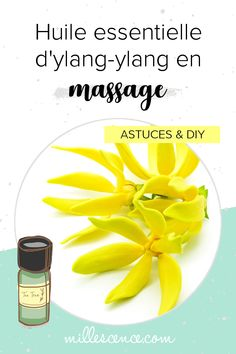 Massage à l'huile essentielle d'Ylang-ylang : Utilisation & Recettes. Comment utiliser l'huile essentielle d'ylang-ylang pour le massage ? Pour quels bienfaits ? Mes conseils & astuces d'aromathérapie. Libido, Vegetables, Health, Diy, Flower, Natural, Tea Tree Essential Oil, Aromatherapy Recipes, Massage Oil