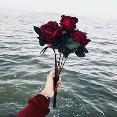Find images and videos about nature, aesthetic and flowers on We Heart It - the app to get lost in what you love. Aesthetic Roses, Red Aesthetic, Aesthetic Pictures, Aesthetic Iphone Wallpaper, Aesthetic Wallpapers, Landscape Illustration, Illustration Art, Disney Instagram, Flower Wallpaper