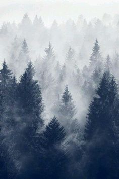 The gradient shown with the snow and the graphic lines of the trees (also shows power) 35 Stunning and Beautiful Tree Paintings for blue trees on black and white ice – painting…Purple and Gold Leaf Abstract Landscape Photography, Nature Photography, Misty Forest, Christmas Aesthetic, Christmas Wallpaper, Mountain Landscape, Beauty Art, Aesthetic Wallpapers, Scenery
