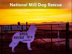 """The """"Spokesdogs"""" of National Mill Dog Rescue include a variety of breeds and ages and every one of them is passionate about spreading the wo..."""