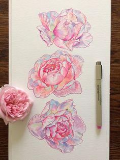 Rose Drawing Starseed A.MY - noelbadgespugh: rose studies - Acrylic Drawing, Painting & Drawing, Kunst Inspo, Art Inspo, Posca Art, Arte Sketchbook, Plant Drawing, Desenho Tattoo, Pretty Art
