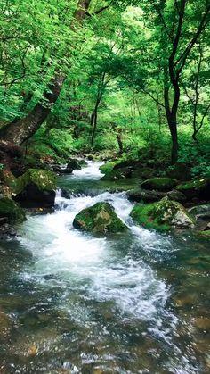 Beautiful Nature Scenes, Beautiful Scenery, Amazing Nature, Forest Photography, Landscape Photography, Life Photography, Beautiful Landscape Wallpaper, Beautiful Landscapes, Most Beautiful Gardens