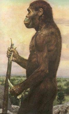 Australopithecus africanus, 2.6 million years ago (Act 5).
