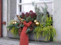 Advent-Pflanzen