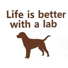 Sin duda la vida es mejor con mi labrador!!!!!!!!