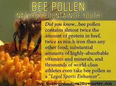 """Did you know... Bee pollen contains almost twice the amount of protein in beef, twice as much iron than any other food, substantial amounts of highly-absorbable vitamins and minerals, and thousands of world-class athletes even take bee pollen as a """"legal sports enhancer""""."""