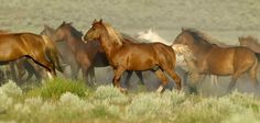 Photo: Save the Wild Horses    Please SHARE our Wild for Wildlife and Nature page. https://www.facebook.com/WildforWildlifeandNature