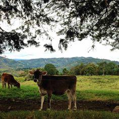 (158) Ganadería y Agricultura - Fotos
