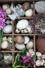 HYACINTHS, VIOLETS NEST EGGS SPRING I MISSED THE BULBS HAPPY TO SEE SPRING WHEN IT ARRIVES