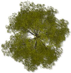 Pics For > Png Trees Top