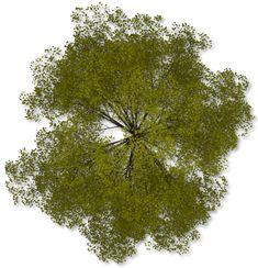 arbol planta png - Buscar con Google