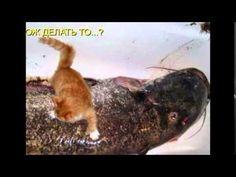 Мое слайд-шоу Фотоприколы с животными и надписями
