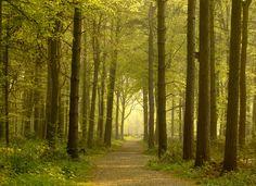 Path through Golden Forest - Fotobehang & Behang - Photowall
