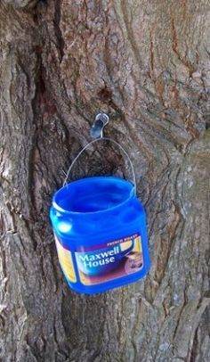 A home made sap bucket hanging on a spile Maple Syrup Taps, Camping Survival, Survival Skills, Homemade Syrup, Sugaring, Living Off The Land, Wild Edibles, Edible Plants, In Case Of Emergency