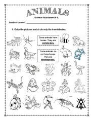 graphic relating to Free Printable Worksheets on Vertebrates and Invertebrates titled 7 Suitable Vertebrates Invertebrates photos within 2015 Education