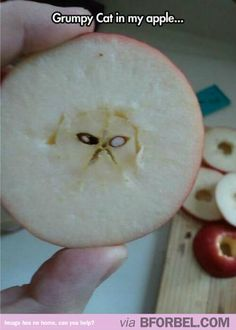 I Found Grumpy Cat In My Apple…