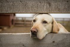 5 Ways You Might Be Unknowingly Crushing Your Dog's Spirit......we all could use a few tips cuz no one is perfect, human or dog!