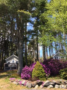 Charming individual cottages for the perfect vacation on the mid coast of Maine. Cottages, Pine, Coast, Spaces, Vacation, Plants, Garden, Pine Tree, Lodges