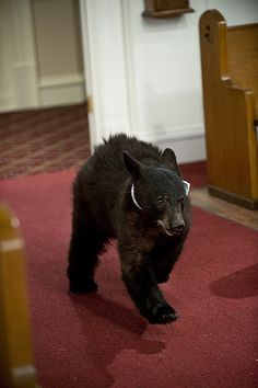 The ring bear from HIMYM. I need this.