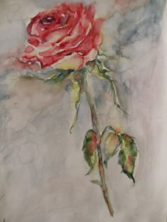 Red rose watercolour painting