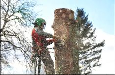 J Carty's Tree Service Ltd (Mullholland) provide services of Tree Trimming in Pierces Corners and professional service at great rates and they are fully equipped with the most up-to-date machines & tools. Machine Tools, Landing, Corner, Plants, Plant, Planets