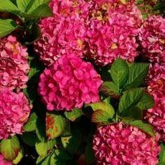 House Plants, Make It Yourself, Flowers, Gardening, Link, Google, Japan Garden, Plants, Balcony