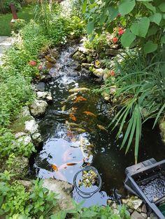 Backyard, Plants, Yard, Backyards, Flora, Plant, Planting