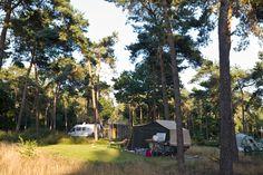 Wakker worden met schapen en lammetjes of een Schotse Hooglander naast je tent. Dat kan op kampeerterrein De Vlagberg in boswachterij Sint Anthonis.