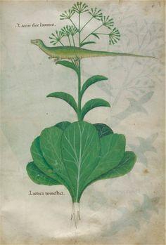 artspotting:  Tractatus de Herbis, Italy, 15th century, Codex...