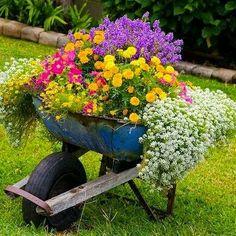 Lindas flores