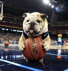 Licensed NBA Dog Gear! http://www.poshpuppyboutique.com/Licensed_NBA_Wear_Dog_s/343.htm
